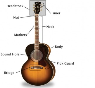 GlooZ - Anatomy of Acoustic Guitar